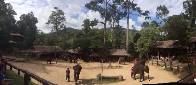 World Elephant Day – Throwback to Visiting Maesa Elephant Camp