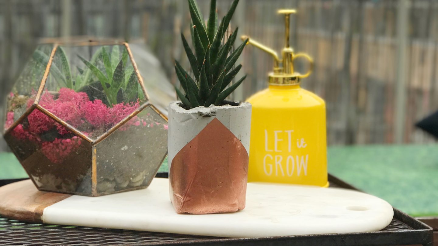 We Made Cement Planters! 🌵