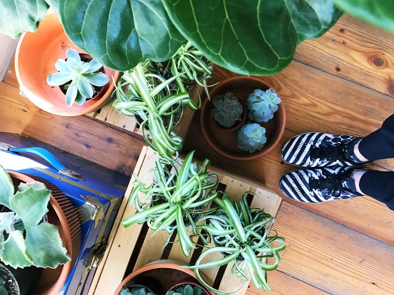 urban gardener, plants, planty places, toronto, casie stewart