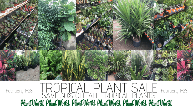 plant world, planty places, plants, toronto, casie stewart, blogger